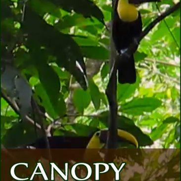 In Varful Padurii Tropicale